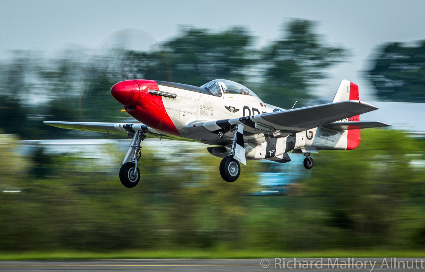 "The Dixie Wing's P-51D ""Red Nose"" will be attending Warbirds Over the Beach fresh from her triumph at the Arsenal of Democracy Flyover event in Washington, DC. Several of the Military Aviation Museum's aircraft also took part in this mammoth undertaking to celebrate the end of WWII. (photo by Richard Mallory Allnutt)"