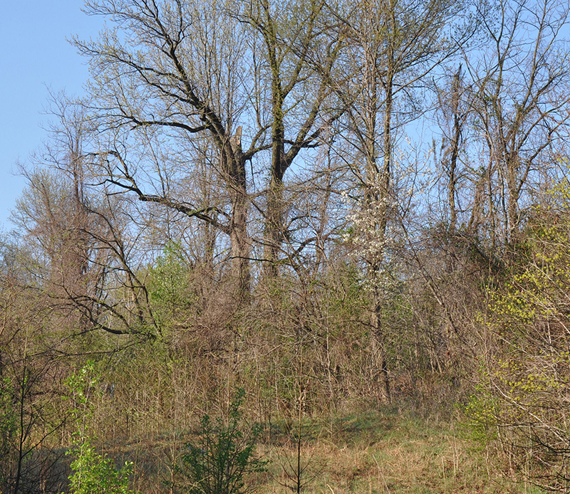 The Crash site as it appeared in 2013 - note the sheared off tree top. (photo via David Cohen)