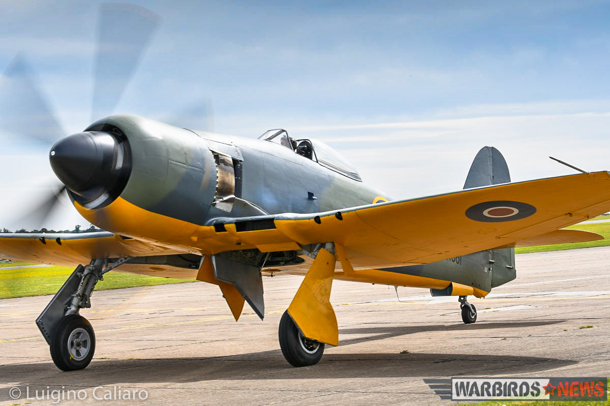 Prototype British aircraft in WWII, like the Sea Fury, typically had yellow paint on the lower surfaces to reduce the chances that trigger-happy anti-aircraft gunners wouldn't suspect it was a new enemy aircraft. (photo by Luigino Caliaro)