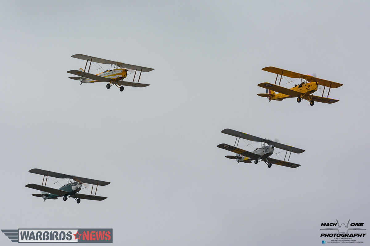 A gaggle of four DH82 Tiger Moths. (photo by Matt Savage)