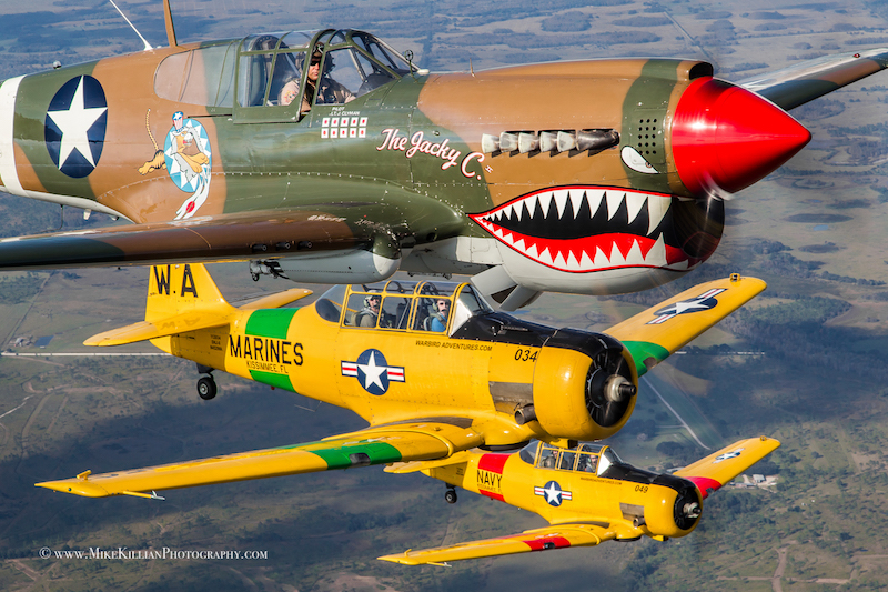 Thom Richard in the American Airpower Museum's P-40 Warhawk, flying in formation with the museum's T-6 Texans ( Photo by Mike Killian)
